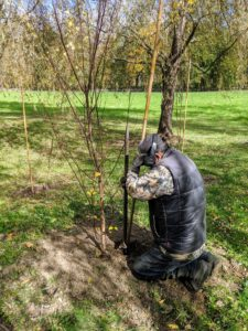 Pete prepares the hole for the stake that will help secure this tree while it is growing.