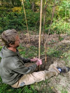 And after the stake is secured into the ground, Gavin ties garden twine in three places – this will ensure the tree is well supported and directed as it develops. The stake will also serve as a marker when the trees are covered in snow and cannot be seen.
