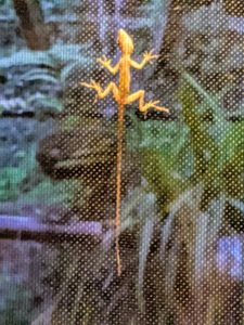 Here is a photo I took one early morning of a gecko on the screen. It reminded me of an Aztec lizard print.