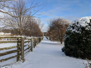 There is always a bit of excitement with the first snow of the season. It's always nice to tour the farm early in the morning after a snowfall. Here is a view between two of my horse paddocks. I am relieved this storm did not cause any damage to the farm. In some areas, the storm dropped up to 20-inches of snow.