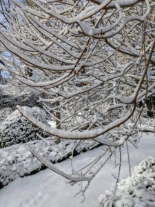 The snow accumulated on every branch but did not weigh any down too much.
