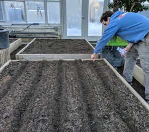 Ryan sprinkles the seeds in the furrows. These raised beds were designed for easy reach from all sides.