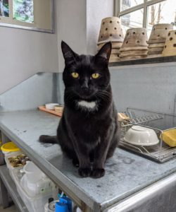 Blackie is next - he's my greenhouse cat. Blackie loves people and is always ready for a rub or some playtime.