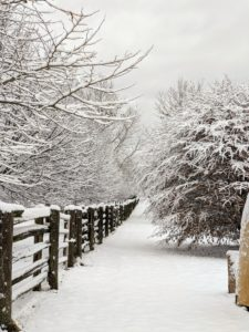 This view is back near my Winter House – just between the paddocks looking north – the pergola is on the right. The snow from this storm is all gone now, but I am glad we captured some of the beauty while it lasted. Go to my Instagram page @marthastewart48.com for more of my photos. Happy holidays!