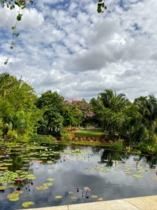 This photo shows the Brazilian Garden which includes a rich biological assortment of beautiful plants and landscape designs.