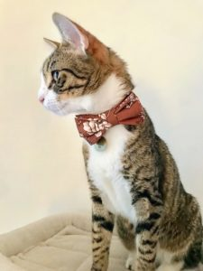 Rachel's recently adopted kitten, Oliver, celebrates his first Thanksgiving by dressing up in his autumn bowtie. He also enjoyed some turkey cat food for dinner.