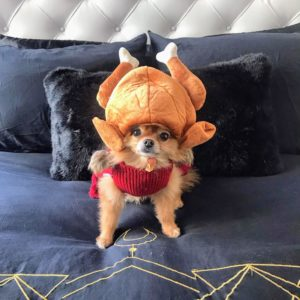 And here's a photo from Rebecca Szymczak, fashion and trend director for Marquee. It's her dog, Lola, in her special Thanksgiving turkey outfit. All these photos are beautiful – I am so happy to see everyone enjoyed the special day! I hope all of you did also. You'll see my holiday weekend photos very soon.