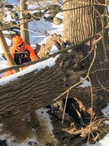 Large projects like these are always left to my longtime arborists at SavATree who are very experienced with these types of jobs. Here is where the tree broke off from the main trunk.