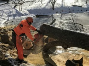 The large trunk is cut into smaller rounds with a chainsaw. It is important to always stand on the opposite side of the limb being cut.