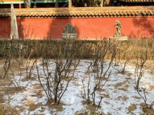 This is the Imperial Garden, the smallest of the eight areas of the palace. Constructed during the Ming dynasty in 1417, it is rectangular in shape and covers approximately 130-thousand square feet. This was a private retreat for the imperial family and is the most typical of the Chinese imperial garden designs. These are tree peonies. They are dormant now with nothing growing beneath them. In the spring, they are filled with blooms. They look exactly like the ones in my garden here in New York.