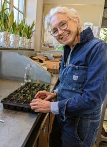 This winter, Wendy is spending several weeks in Bedford transplanting hundreds of growing flower seedlings. It's a great way to learn about my farm and how its growing season differs from the one up in Maine.