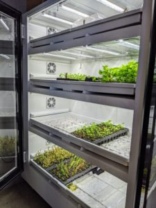Most of the seedlings start off in our commercial-size Urban Cultivator. The automated system provides a self-contained growing environment with everything the plants need to thrive.