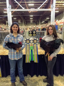 Sisters, Heather and Laura Candea also had winning poultry - Rhode Island Reds. Rhode Island Reds were created in America in the late 1800s as another dual-purpose fowl, meaning they were used for their eggs and their meat.