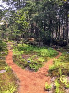 I talked about the paths through the property. Each season, the outdoor grounds crew covers the meandering footpaths with pine needles – they add such charm to the woodland.