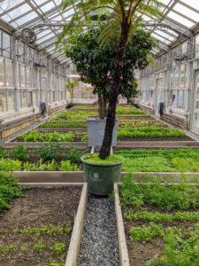 During the winter months, my gardeners keep a good eye on this vegetable greenhouse – temperatures are monitored and the beds are kept clean and weed-free.