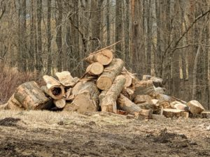 Here's another pile of larger pieces which will be put through the tub grinder or the chipper, or split and stacked for firewood. If I cannot save a tree, it is comforting to know I can reuse the wood left behind.