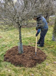 """Too much mulch will suffocate and kill the tree. Remember, """"bare to the flare"""", which means nothing should ever be above the tree's flare – the point where the tree stops widening at the bottom."""