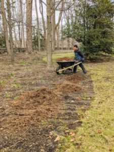Here's Phurba taking another wheelbarrow of mulch to the bed. Winter is also a good time to mulch beds because the ground is still frozen.