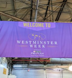 The Westminster Kennel Club Dog Show launched in 1877 and is now one of the longest continuously running American sporting events, second only to the Kentucky Derby.