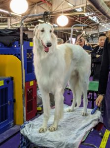 "Borzois are large Russian sighthounds that resemble some central Asian breeds such as the Afghan hound, Saluki, and the Kyrgyz Taigan. Borzois can generally be described as ""long-haired greyhounds"". Borzois come in virtually any color. The coat is silky and flat, often wavy or slightly curly."