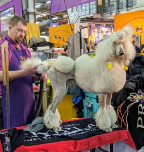 Show dogs are very used to all the grooming. Some breeds need more grooming than others – it is important to consider this whenever thinking of adding a dog to your family.