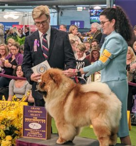 In the end, both Buddakan and Talosa took Champion Select. Select Dog and Select Bitch are Champions that were recognized as the top quality of their sex after Best of Breed and Best Opposite. Nice job!