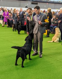 The judge also looks at bone structure and stance. The judge compares each dog against the parameters of the idealized version of its breed or the standard.