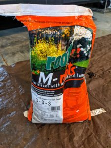 A good fertilizer made especially for new plantings is sprinkled generously into the potting medium and mixed. We use M-Roots with mycorrhizal fungi, which helps transplant survival and increases water and nutrient absorption.