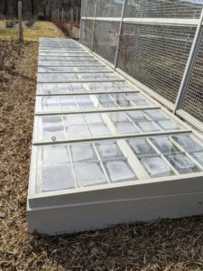 Using a cold frame is easy, economical, and space-efficient. How do you protect your young dormant plantings in winter? Share your gardening comments with me in the section below.
