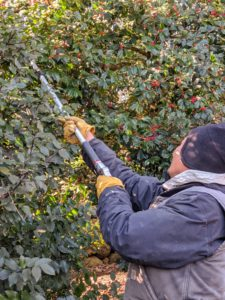 Chhewang has become a very excellent and skilled pruner and now oversees all the pruning of our smaller trees, shrubs, and bushes all around the farm.