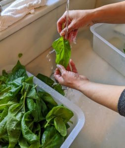 Once inside my Winter House, Sanu and Elvira wash the vegetables in cold water.