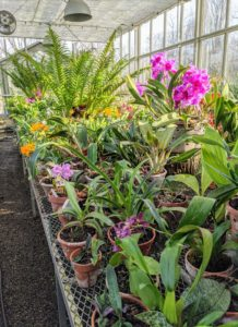 Orchids are such gorgeous plants – they are a wonderful sign that spring is on its way. What orchids do you have? Share your comments in the section below.