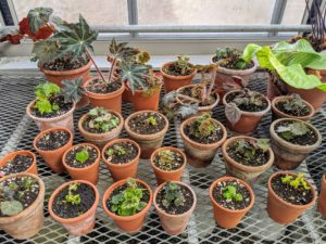 In one corner of the greenhouse, we keep small pots for young developing plants. I like to add to my collection whenever I visit botanical gardens, nurseries, and even friends' gardens.