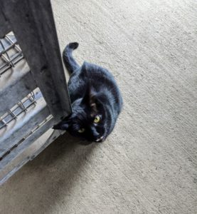 Blackie will come when called and meow for attention.