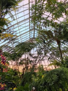 We toured the Conservatory after-hours, so here is the sunset through the panes of glass in the Upland Rainforest Gallery.