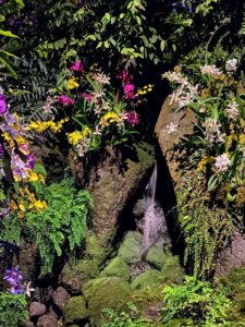 Many orchids cover this waterfall in the Upland Rainforest Gallery.