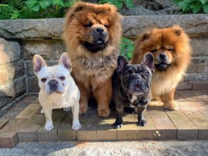 And here is a photo of all four of them at Skylands, my home in Maine, last summer. Here's to all our beloved furred friends. And stay tuned to my blog. I'll be sharing fun dog photos from the show later this week.
