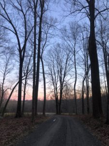 Here is another photo showing the beautiful pink and blue early morning sky through the trees. In the city, Liz's usual course is along the West Side Highway, so this country jog is a treat. She says she loves the varied terrain, especially the hills.