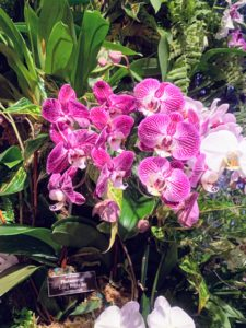 This orchid is called Phalaenopsis 'Long Pride Joy.' Phalaenopsis orchids prefer fairly warm climates. The ideal night temperature is 62 to 65 degrees Fahrenheit and daytime temperatures of 70 to 80 degrees Fahrenheit.