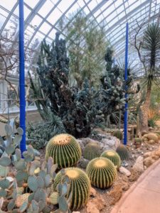 We had a little time to walk through the American Deserts Gallery in the Enid A. Haupt Conservatory. Once inside, we saw Golden Barrel Cactus, Echinocereus grusonii, Cereus peruvianus 'Monstrosus', and Opuntia. The bamboo was painted a bold blue for an Orchid Show installation.