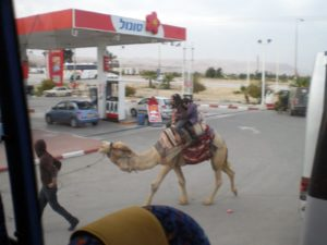 A gas station in the West Bank - yes, that is a camel!