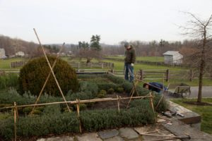 I decided that the terrace knot garden needed a burlap covering this year.