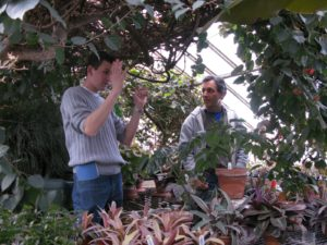 Logee's greenhouses are packed with plants.  Shaun and Byron discuss Stongylodon, one of the only flowers in the world that is the color jade.  There were only buds on this vine.