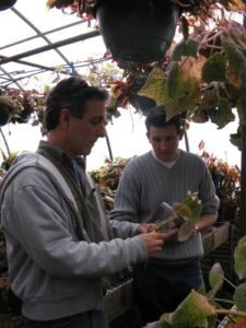 Byron was very generous sharing cuttings of his Begonia collection.
