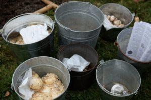 Buckets of assorted allium bulbs