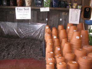When you purchase a plant at Logee's, you can also purchase a terra cotta pot - Logee's provides free soil - their own special mix - and you can re-pot your plant before taking it home.