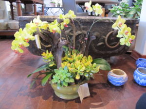 The plantings at Inner Gardens are just phenomenal - this old yellow planter contains beautiful orchids and succulents.