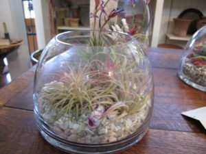 Air plants will do just fine in an arid planter, like this - this is a very pretty example.