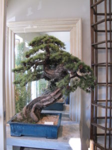 The only artificial thing in inner gardens was this very lifelike bonsai tree.