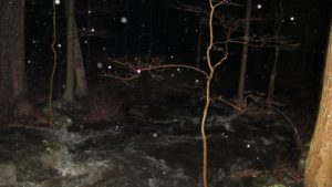 In this photo, you can clearly see the raging waters flooding the woods.